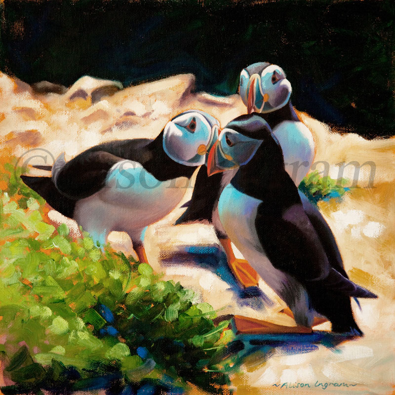CourtingPuffins