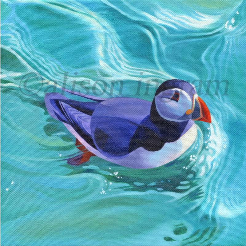Swimming-Puffin
