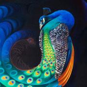 Peacock-TN