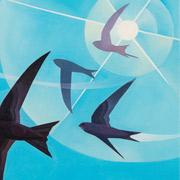 Screaming-Swifts-TN
