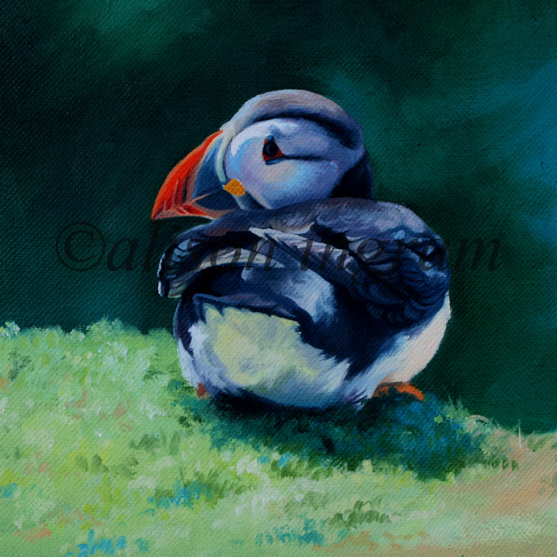Resting-Puffin